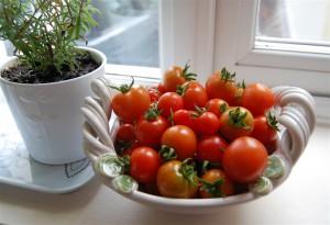 Home grown tomato crop